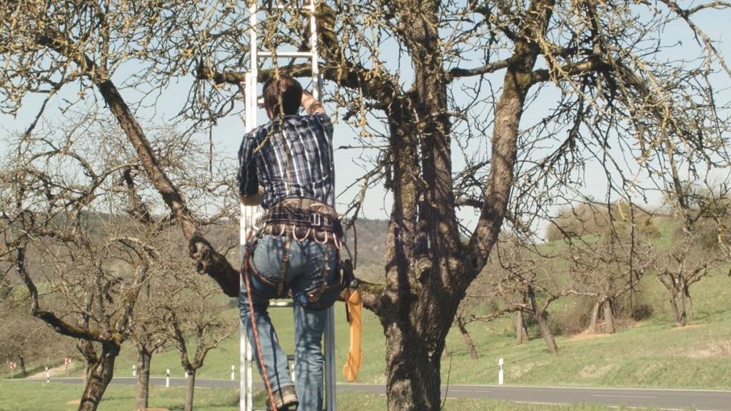 Leiter und Sicherung